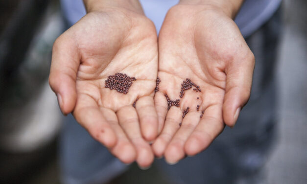 Comment Semer des graines ? Nos conseils pour réussir aisément