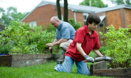 Les meilleurs outils de jardinage