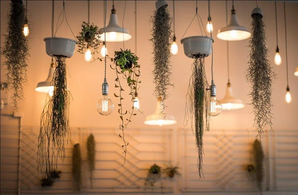 Plantes suspendues et luminaires
