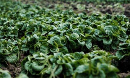 Choisir la meilleure binette de jardin en 2021 : Notre top 4