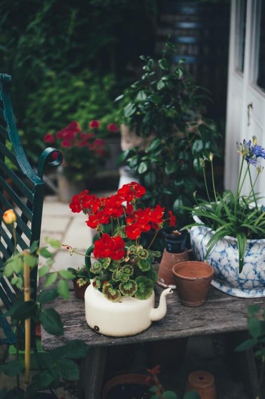 Théière pot pour plantes