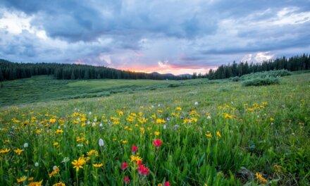 Les 10 Plantes et fleurs du printemps