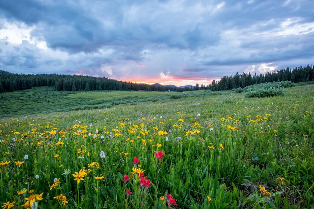 Plantes et fleurs du printemps