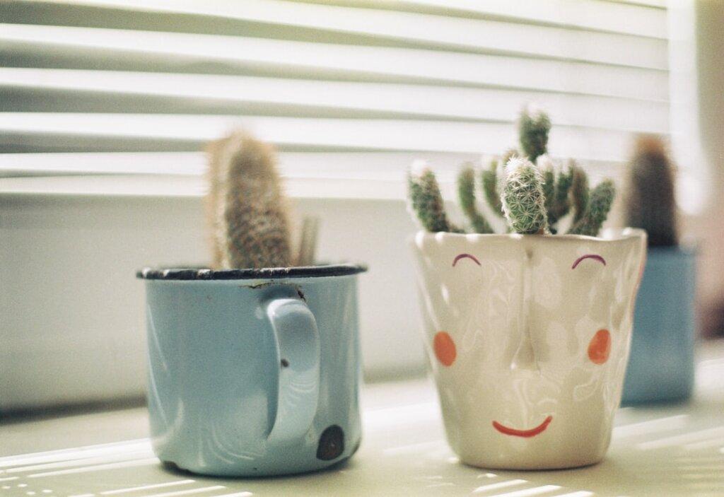 Plantes dans des tasses
