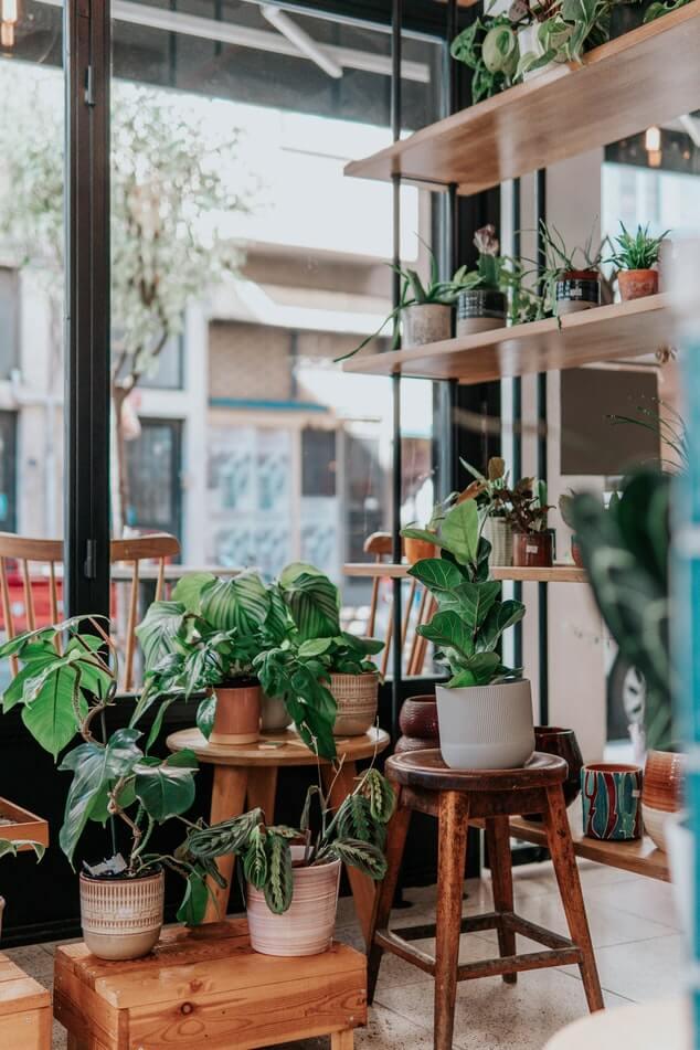 Décoration d'intérieur avec des plantes