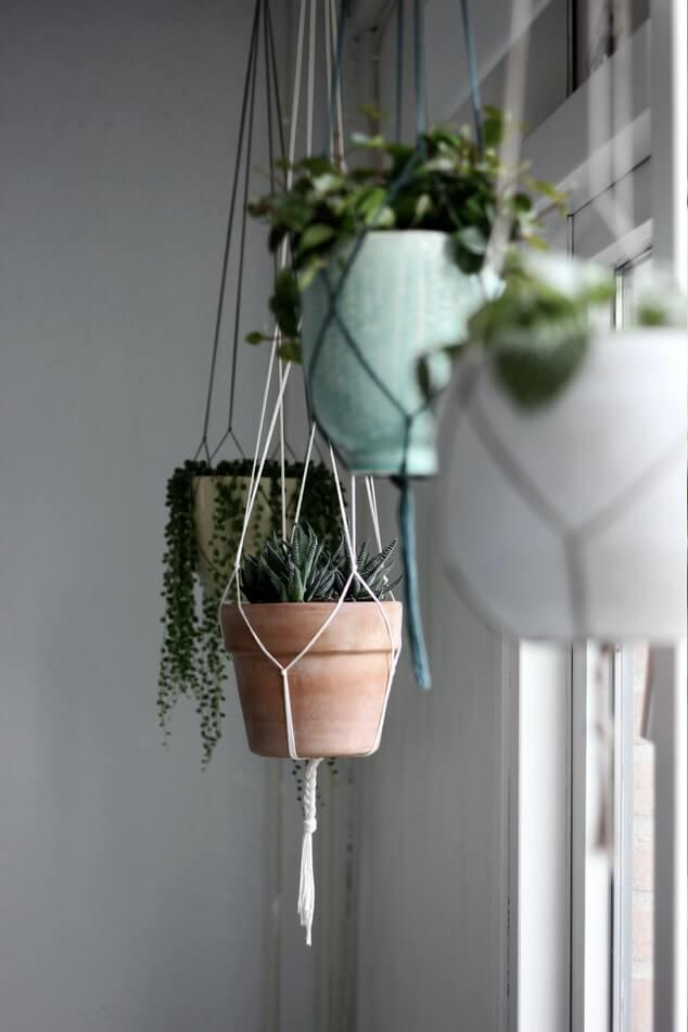 Plantes suspendues avec pots