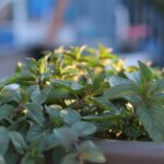 Cultiver ses propres herbes aromatiques