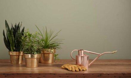 Comment faire du jardinage d'intérieur